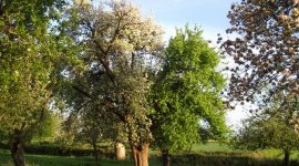 Longney orchard visit May 2015 018