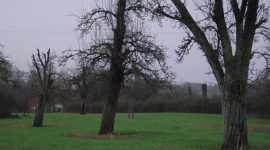 Wick orchard