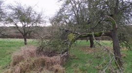 lambourne House orchard 009