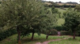 General Orchard View of Wheatcroft Orchard
