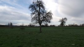 Gamage Court Orchard