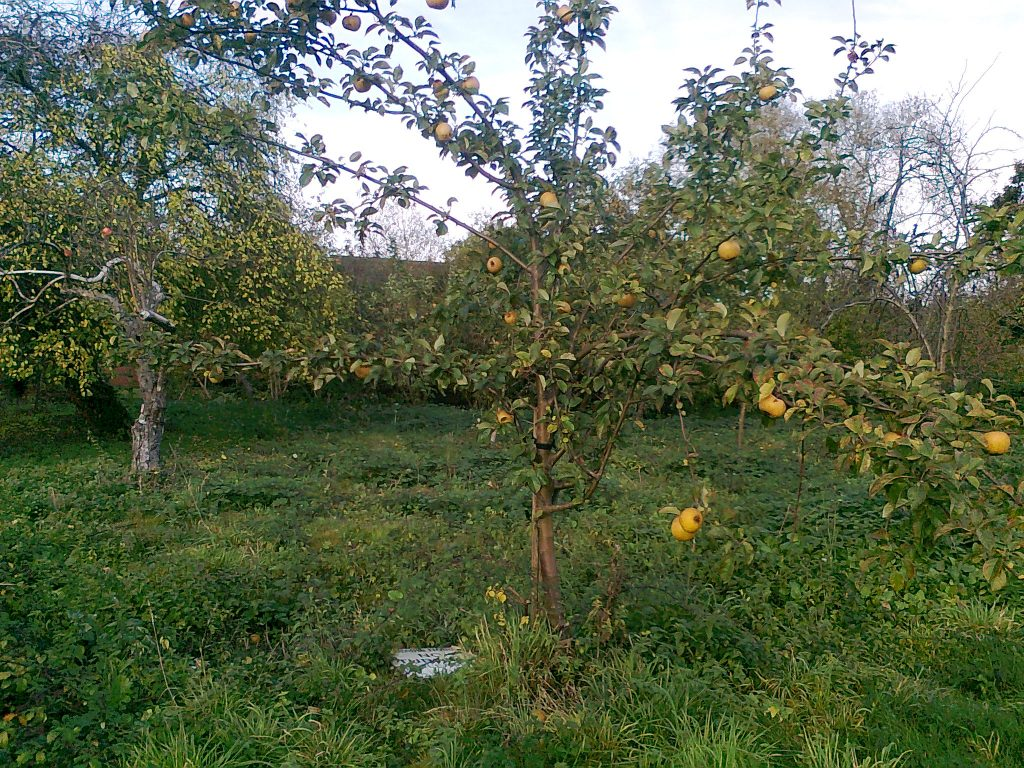 Partridges Orchard
