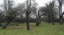 Wick Home Orchard