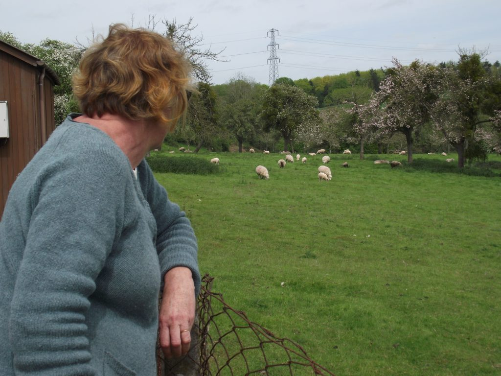 Oxnalls orchard visit May 2015 with Harriet Carty 009