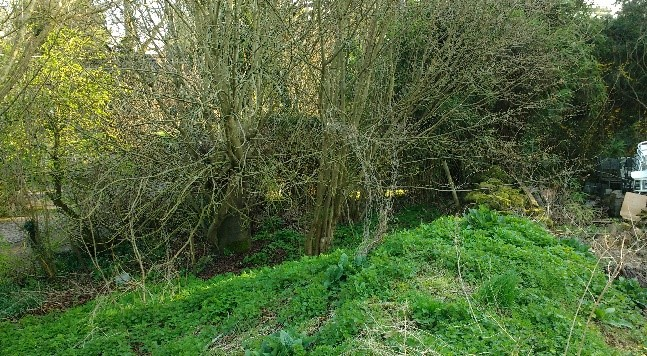 The eastern section of th4e land is the ticket of sallow, elder etc forming a closed canopy.