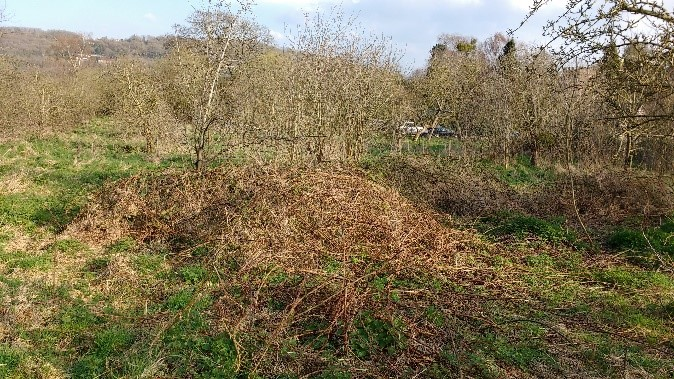 Overgrown sward at Old Rectory